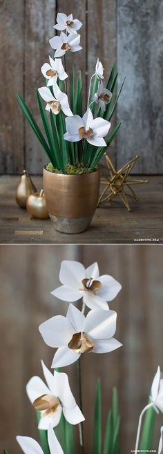 #PaperOrchid #OrchidPlant #PaperFlowers www.LiaGriffith.com: