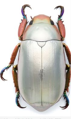 ☆ Silver Beetle :+: By Christopher Marley ☆