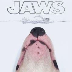 Un chien et son maître s'amusent en créant des illustrations plutôt loufoques. Il s'appelle Rafael Mantesso et il a décidé d'amuser la galerie sur Instagram en publiant des photos ou il met en scène son chien dans des situations les plus cocasses.