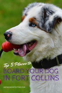 Places to go with your dog in fort collins wet noses places to go with your dog in fort collins wet noses recommendations wet noses animal tips by wet noses pet sitting pinterest fort collins solutioingenieria Choice Image