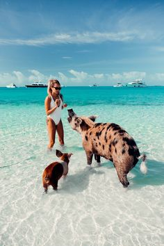 The Bahamas is a dream vacation Discover this travel guide itinerary with all the things to do that will take you from Nassau to Exumas pigs and Eleuthera pink sand beach with inspirational pictures Dream Vacations, Vacation Places, Vacation Spots, Vacation Travel, Beach Travel, Les Bahamas, Bahamas Pigs, Eleuthera Bahamas, Pig Island Bahamas