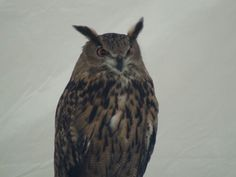 """"""" birds are some of my favorite creatures. This little (big) bird is one of the rescued birds of prey"""".  artfromperry"""