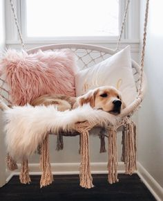45 coole und moderne DIY Hundebett Ideen 45 coole und moderne DIY Hundebett Ideen Related posts:how I think of kels because she so smol n Stereotypes About Dog People That Are Totally True. Cute Room Ideas, Cute Room Decor, Gold Room Decor, Teen Room Decor, Wall Decor, Room Ideas Bedroom, Bedroom Decor, 70s Bedroom, Teen Bedroom Designs