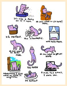 Somewhere, a cat is doing this right now…
