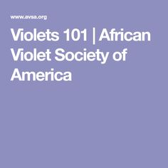 Violets 101 | African Violet Society of America