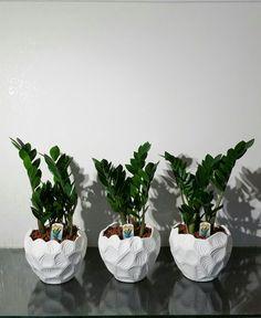 Πράσινα φυτά για το γραφείο
