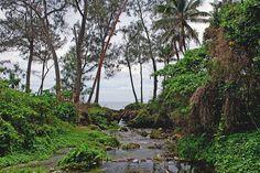 A stream on Efate island ◆Vanuatu - Wikipedia http://en.wikipedia.org/wiki/Vanuatu #Vanuatu