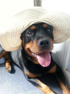 31 Reasons Rottweilers Are The Absolute Worst