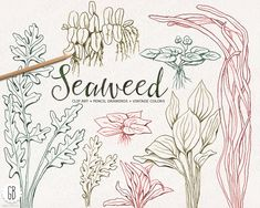 Seaweeds, seagrasses, handdrawn, vintage colors, pencil drawing, sea life, clip art, coral reef, retro stationery