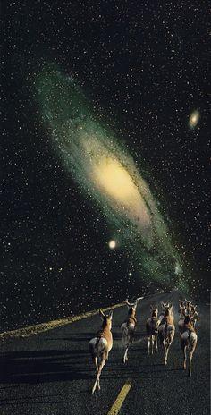 Where The Winter Stars Burn, byTim Lukeman