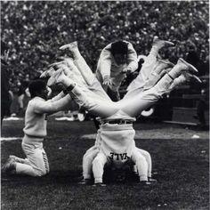 Yale cheerleaders in 1960 William K. History Of Cheerleading, Cheerleading Pictures, History Timeline, Historical Images, Dallas Cowboys, University, Girls, Vintage, Toddler Girls