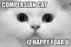 Best LOLcat of Ever! #polyamory by kelleytastic, via Flickr