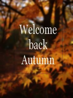 HAPPY FALL EVERYONE! Especially to those of you who, like me, have been waiting impatiently -- Tita, Elizabeth. The first day of Autumn. First Day Of Autumn, Autumn Day, Hello Autumn, I Fall, Autumn Leaves, Winter, Summer Fall, Mabon, Samhain