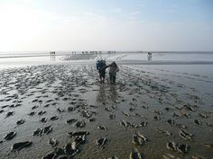 Walking on the Wad. At low tide one can walk from the Dutch coast to the islands. It's called 'Wadlopen'. A great adventure.