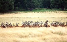 Richmond Park, London | Richmond Park - London 2012 Olympics cycling road race and landmarks ...