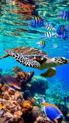 Underwater Animals, Underwater Life, Sea Turtle Pictures, Beautiful Sea Creatures, Cute Turtles, Sea Turtles, Ocean Creatures, Sea And Ocean, Under The Ocean