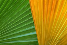 This picture is in Public Domain. Colorful Palm Leaves by Petr Kratochvil