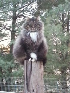 'Baby' the barn cat