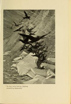 Crows, Whose Home is the Wilderness: Some Studies of Wild Animal Life, William J. Long, 1907.