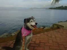Relocating a dog to Panama isn't impossible, just ask Kelsey.