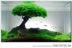 Ideas and inspiration for your aquascaping