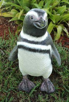 magellanic penguin - Google-søk