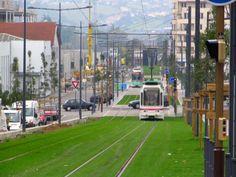Light rail on grass.