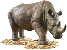 South African Wildlife Safari Rhino Home Garden Sculpture Statue Figurine African Rhino, African Animals, African Safari, African Antelope, Garden Animal Statues, Outdoor Garden Statues, Wildlife Safari, Nature Artwork, Animal Sculptures