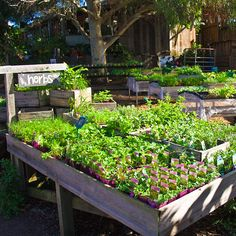 Take a stroll around our Melbourne Campus at CERES, and explore the fresh herbs and produce on offer.