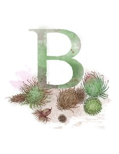 Letter B, Bur, Nature Alphabet Initial Nursery Home Decor 8.5 x 11