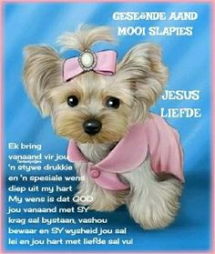 Good Night Wishes, Good Night Sweet Dreams, Evening Quotes, Evening Greetings, Goeie Nag, Goeie More, Afrikaans Quotes, Sleep Tight, Cute Cats