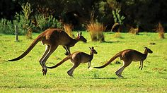 Australia: Wild Tasmania & the Rainforest - Go Ahead Tours