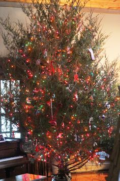 Recipe for Christmas Tree Water: 2oz Regular Chlorox Bleach -prevents algae, etc.; 8oz Karo Syrup (clear) - the sugar feeds the tree; 2 pinches of Epsom Salts - magnesium sulphates make the needles green;  5 quarts of water.