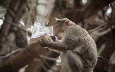 インド サルが新聞の株式欄を読みふけり「一喜一憂」