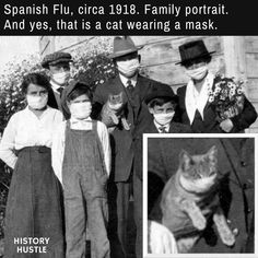 Yep, that's a masked kitty - 15 Hilarious History Memes You Need to See Right Now History Memes, History Facts, History Timeline, History Photos, Wtf Fun Facts, Interesting History, African American History, Historical Photos, Funny Pictures