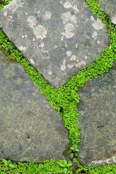 carexTours — harusemi: Detail of creeping thyme in between. carexTours — harusemi: Detail of creep Garden Beds, Garden Paths, Garden Landscaping, Herb Garden, Landscaping Ideas, Stone Walkway, Paving Stones, Landscape Design, Garden Design