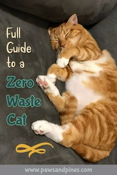 Here are some useful tips on how to live with a zero waste cat. Where to buy cat litter in bulk, what cat poop bags to use, and what bulk cat food really means. Zero Waste, Eco Friendly Water Bottles, Dry Cat Food, Dog Food, Pet Care Tips, Eco Friendly House, Buy A Cat, Cat Toys, Cat Lovers