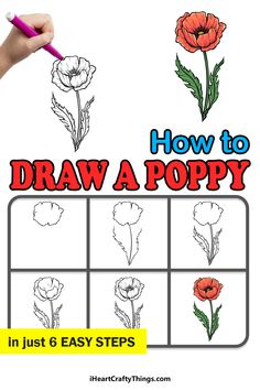 Poppy Drawing, Draw Flowers, Different Flowers, Step Guide, Poppies, Symbols, Drawings, Paint Flowers, Poppy