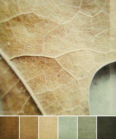 winter leaves palette