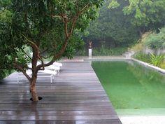 wood decking, pool, trees