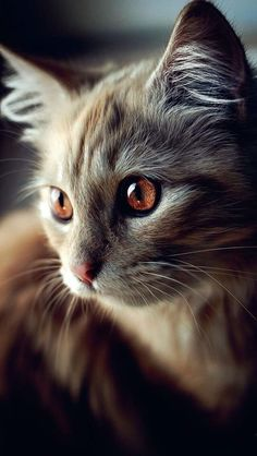 What amazing eye color this beautiful kitty has