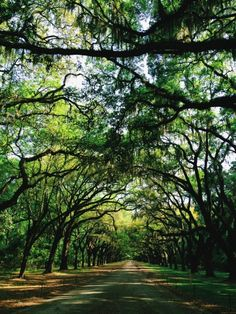 Savannah, GA | Wormsloe