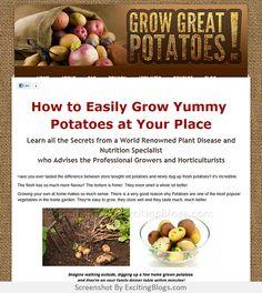 Grow Potatoes, Fresh Potato, Dug Up, Plant Diseases, Gardening Blogs, Nutrition, Vegetables, Plants, Vegetable Recipes