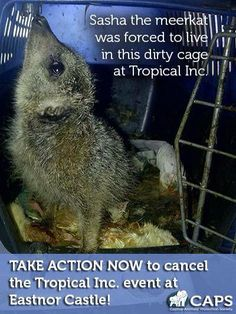Fined under the Animal Welfare Act, Tropical Inc never stopped trading. @captiveanimals, we need to talk
