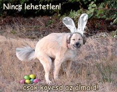 Funny Easter Pictures, Funny Animal Pictures, Dog Pictures, Funny Animals, Cute Animals, Crazy Animals, Animal Fun, Happy Animals, Animal Memes