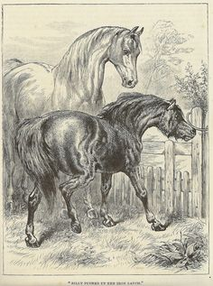 Free Horse Clipart Vintage Images - Percy & Bloom - Percy & Bloom