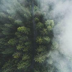 Over the fog. 🌲