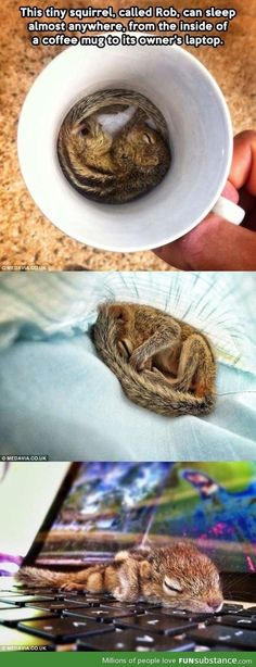 Rob the tiny squirrel...d'aww...him on the laptop...cutest thing I've seen in a loooong time. :)