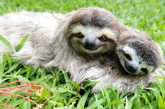 sloth friends