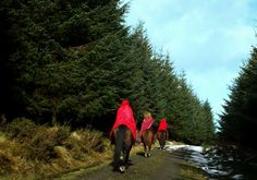 A triad of pagan riders returning from the ancient stone circle in Fernworthy where they ventured to celebrate yule on a snowy day.